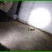 Foglamp CREE 15 Watt Fokus (Tipe A)